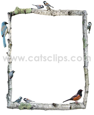birch birds border
