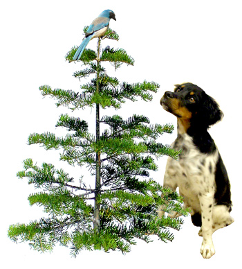 Bird Dog Tree from www.catsclips.com