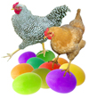Chickens on Colored Eggs