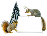 christmas squirrel card photo card
