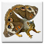 squirrel with butterfly coaster at cafepress