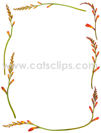Orange Crocosmia buds in a floral border