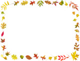 fall colored leaves border