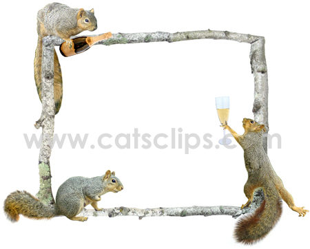 party squirrels border