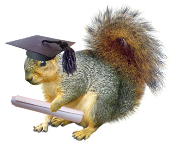 squirrel graduation