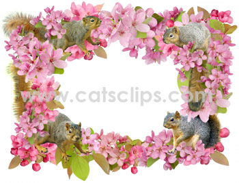 squirrel flower border