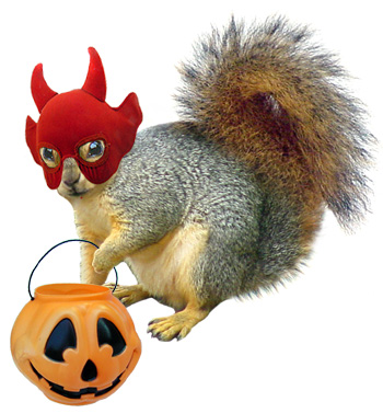 trick or treat squirrel
