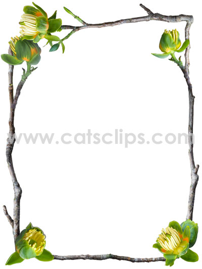 tulip tree flowers border from catscips.com