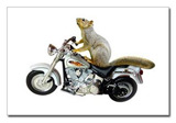 Squirrel on Motorcycle Postcards from catsclips.com.